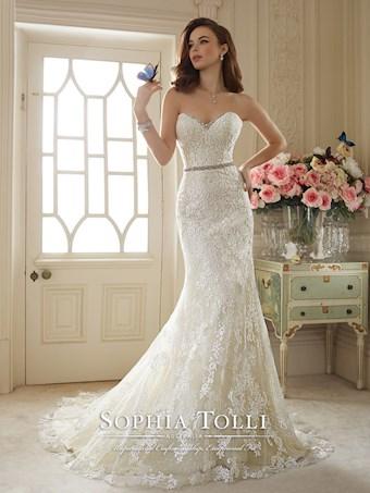 Sophia Tolli  Y11649
