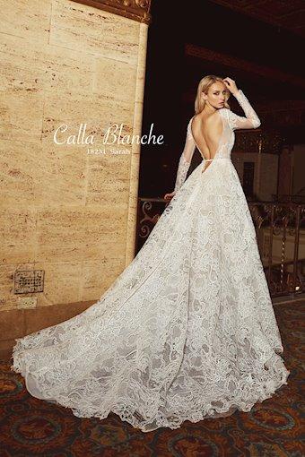 Calla Blanche 18231