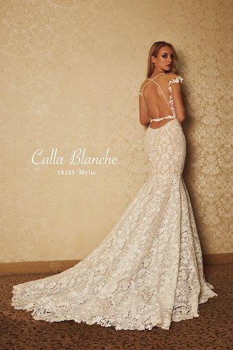 Calla Blanche 18245
