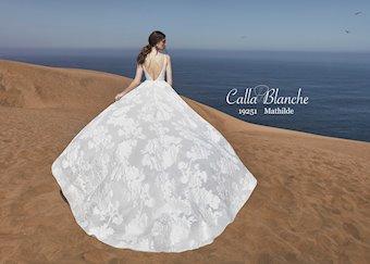Calla Blanche 19251