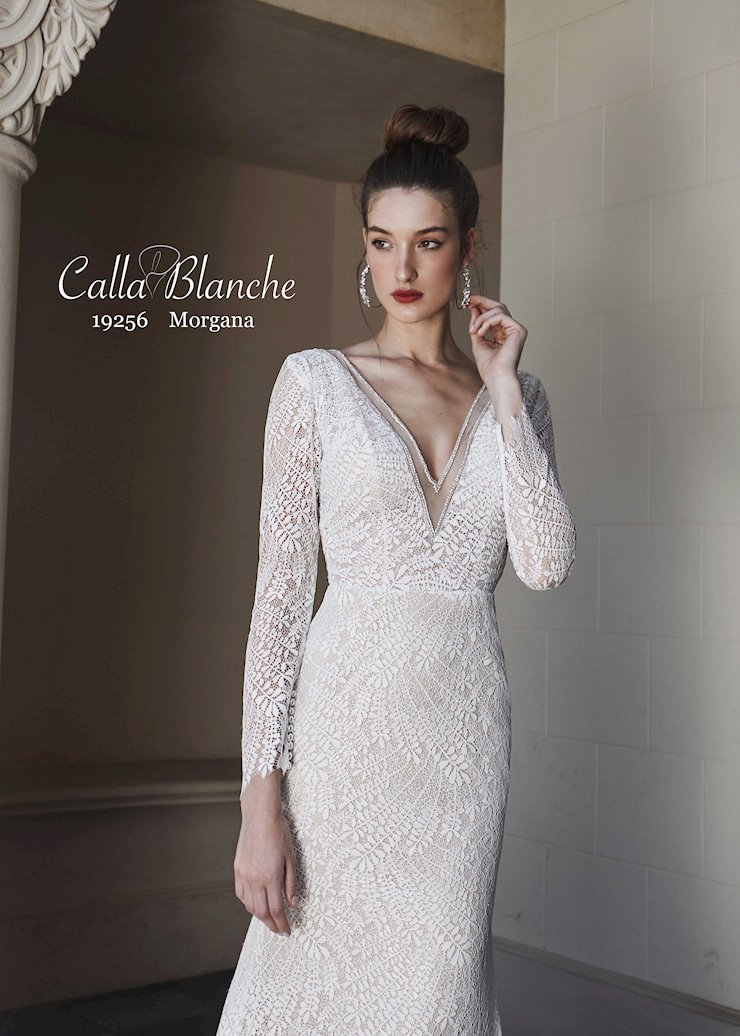 Calla Blanche #19256  Image