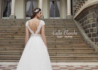 Calla Blanche 19257