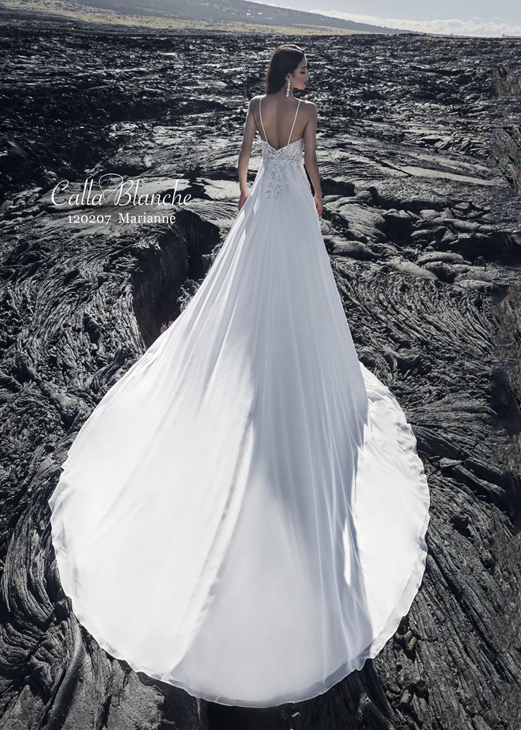 Calla Blanche #120207 Image