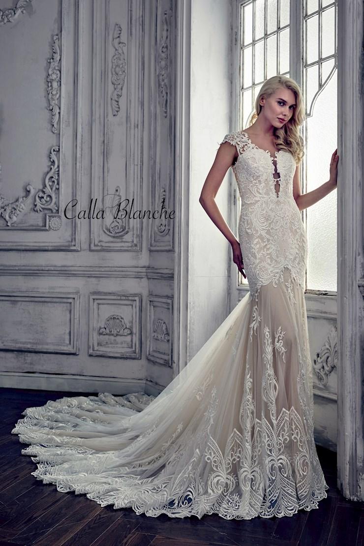 Calla Blanche 17112 Image