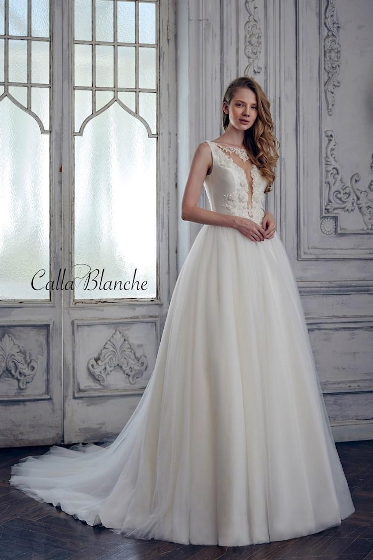 Calla Blanche 17125 Image