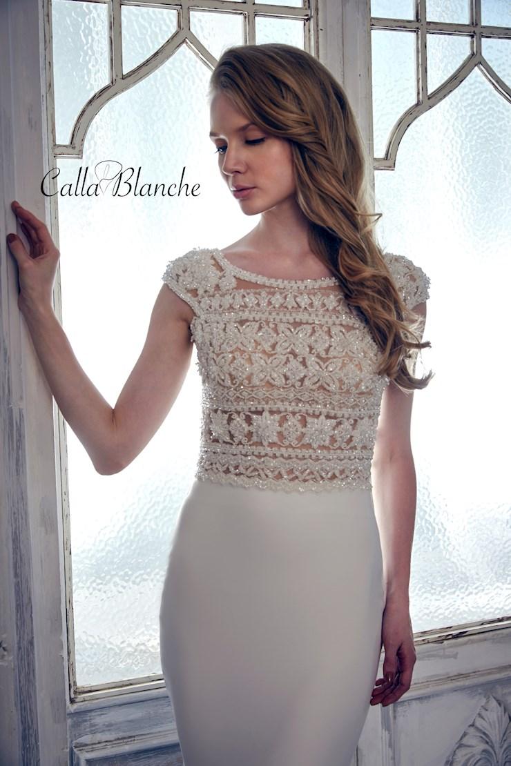 Calla Blanche 17126 Image