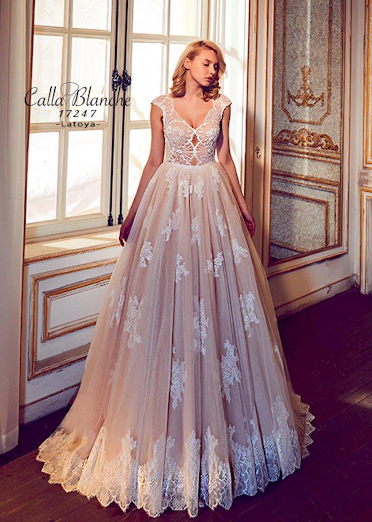 Calla Blanche 17247  Image